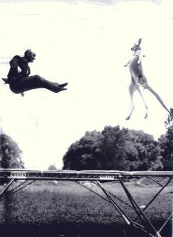 George Nissen & Kangaroo bouncing on trampoline